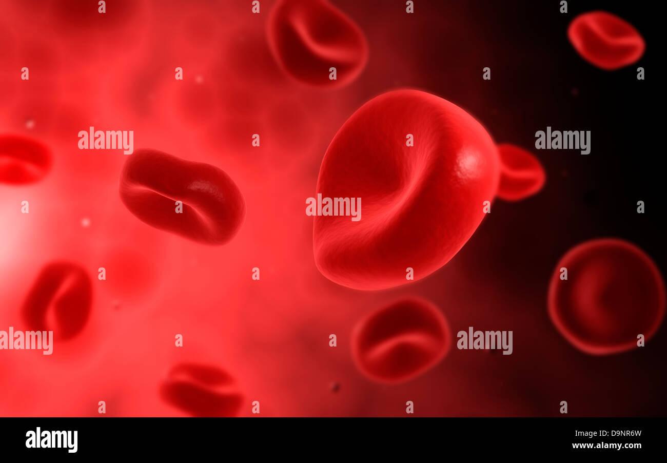Mikroskopische Ansicht der roten Blutkörperchen. Stockbild