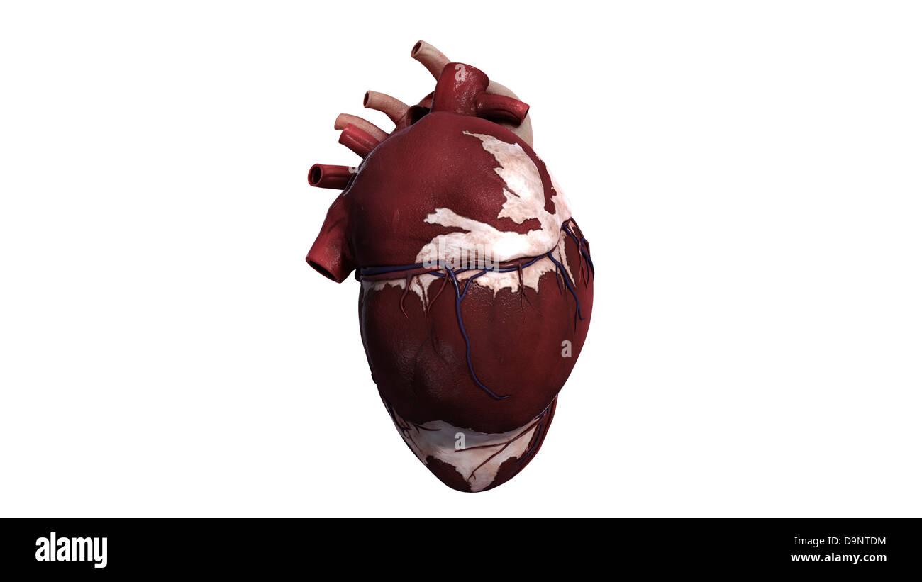 Fantastisch Menschliche Körper Anatomie Linke Seite Fotos ...