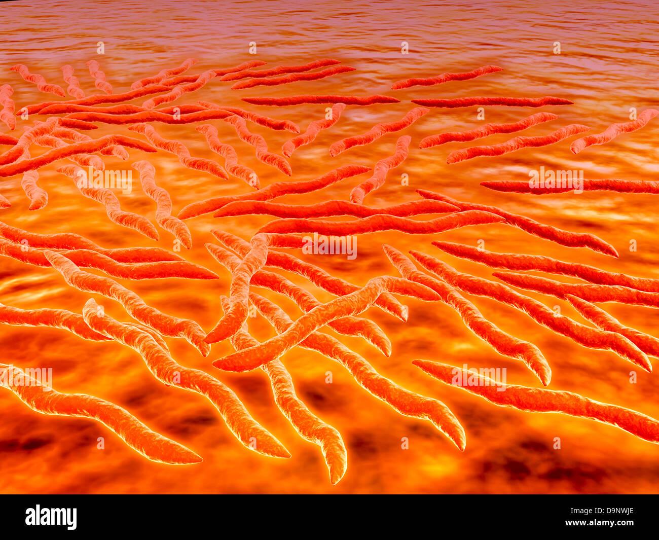 Mikroskopische Ansicht einer Gruppe von Borrelia Burgdorferi, die bakterielle Agent der Lyme-Borreliose durch Zecken Stockbild