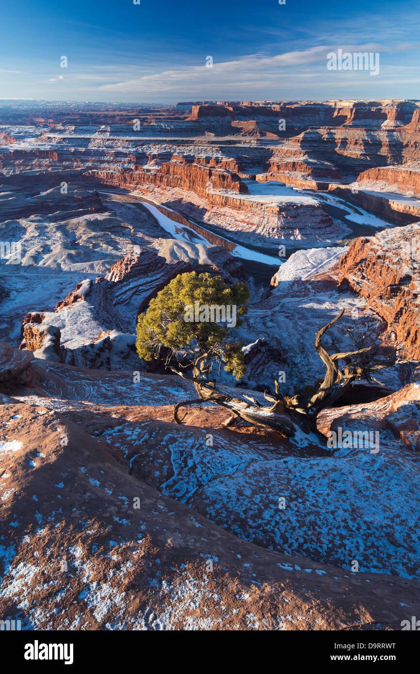 Das Colorado-Tal von Dead Horse Point an der Dämmerung, Utah, USA Stockfoto