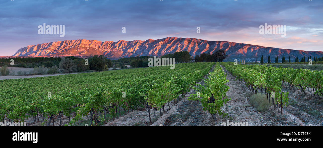 ein Weinberg nr Puyloubier mit der Montagne Ste Victoire in der Morgendämmerung, Var, Provence, Frankreich Stockbild