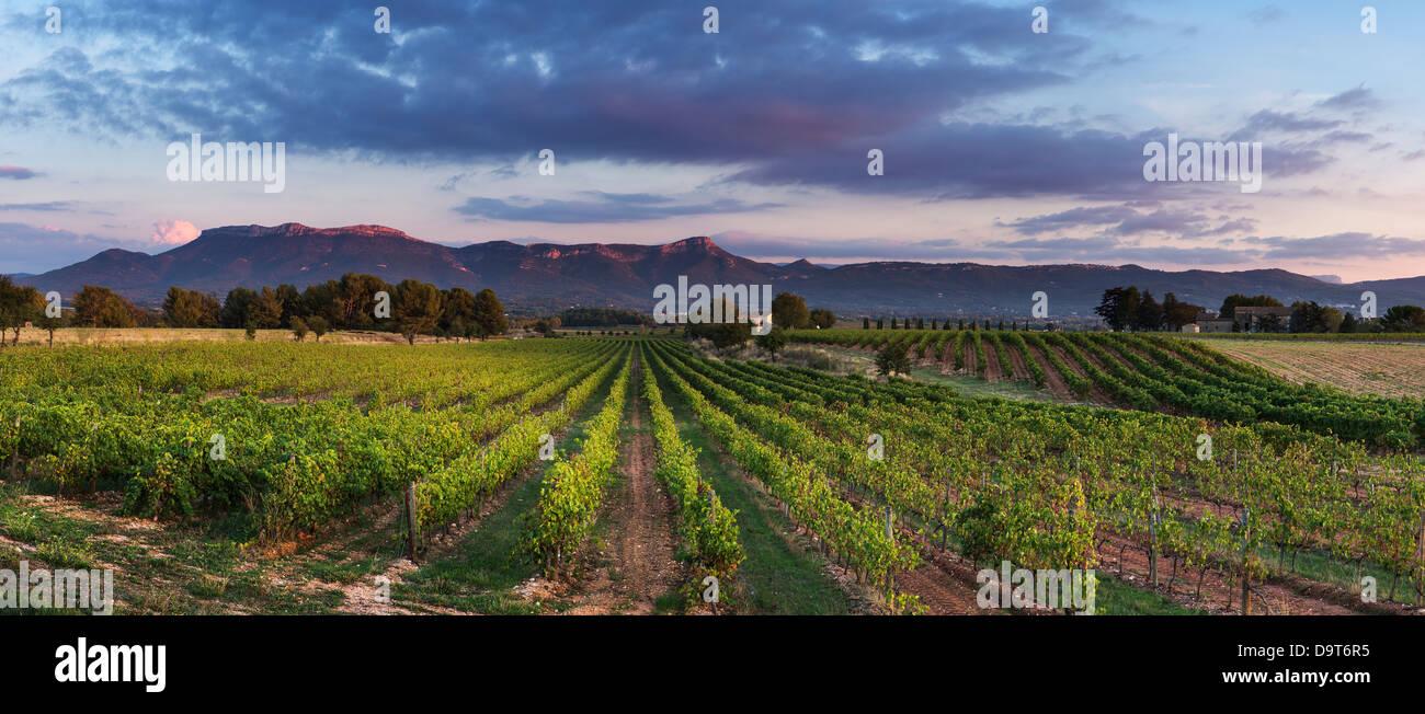 ein Weinberg nr Puyloubier mit dem Massif De La Ste Baume in der Abenddämmerung, Var, Provence, Frankreich Stockbild