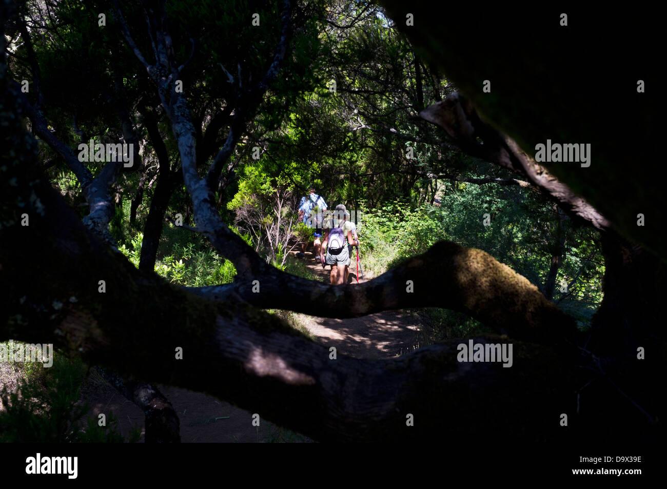 Wandern in den Wald auf Teno Stockbild