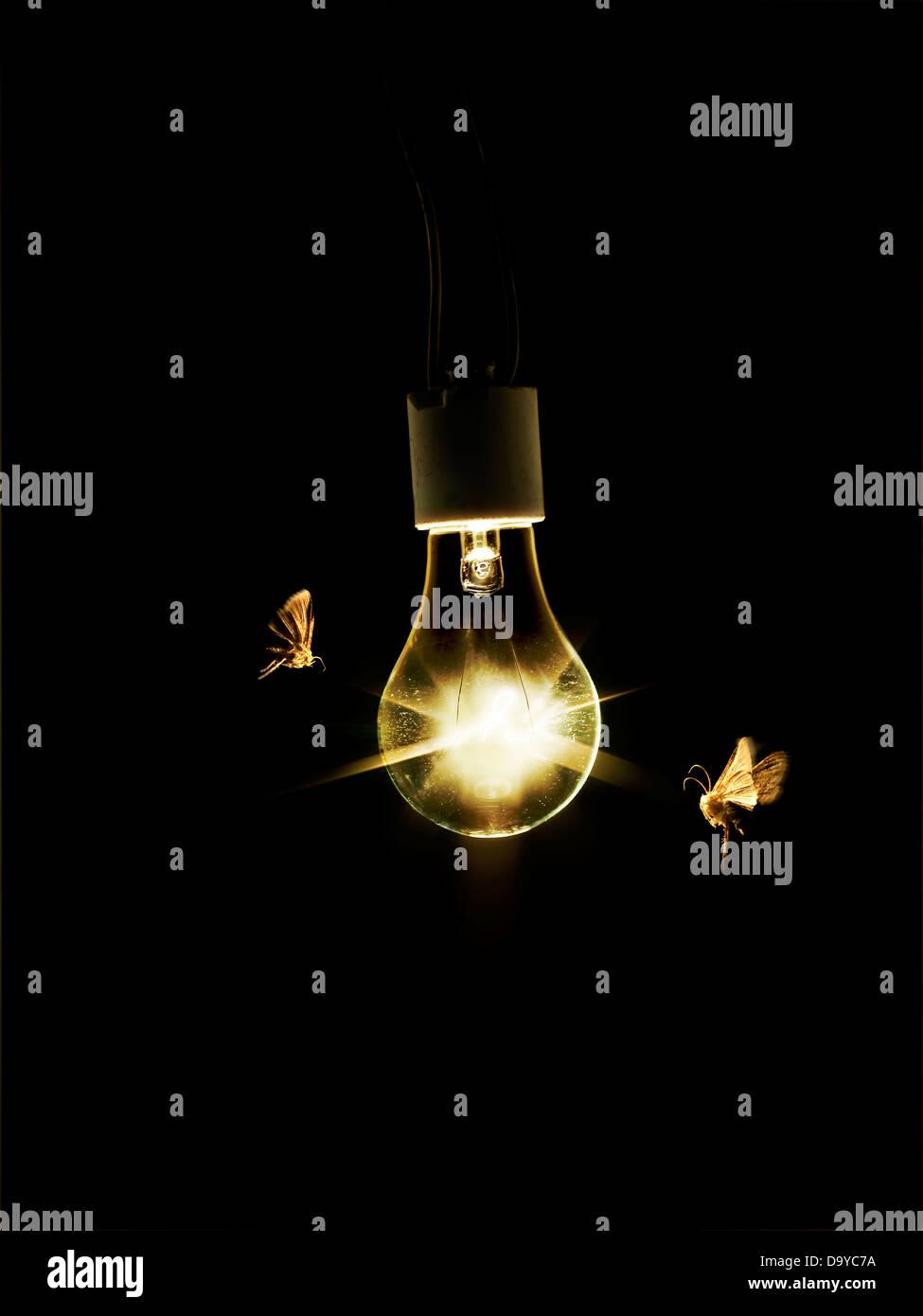 Glühbirne mit Motten Stockbild