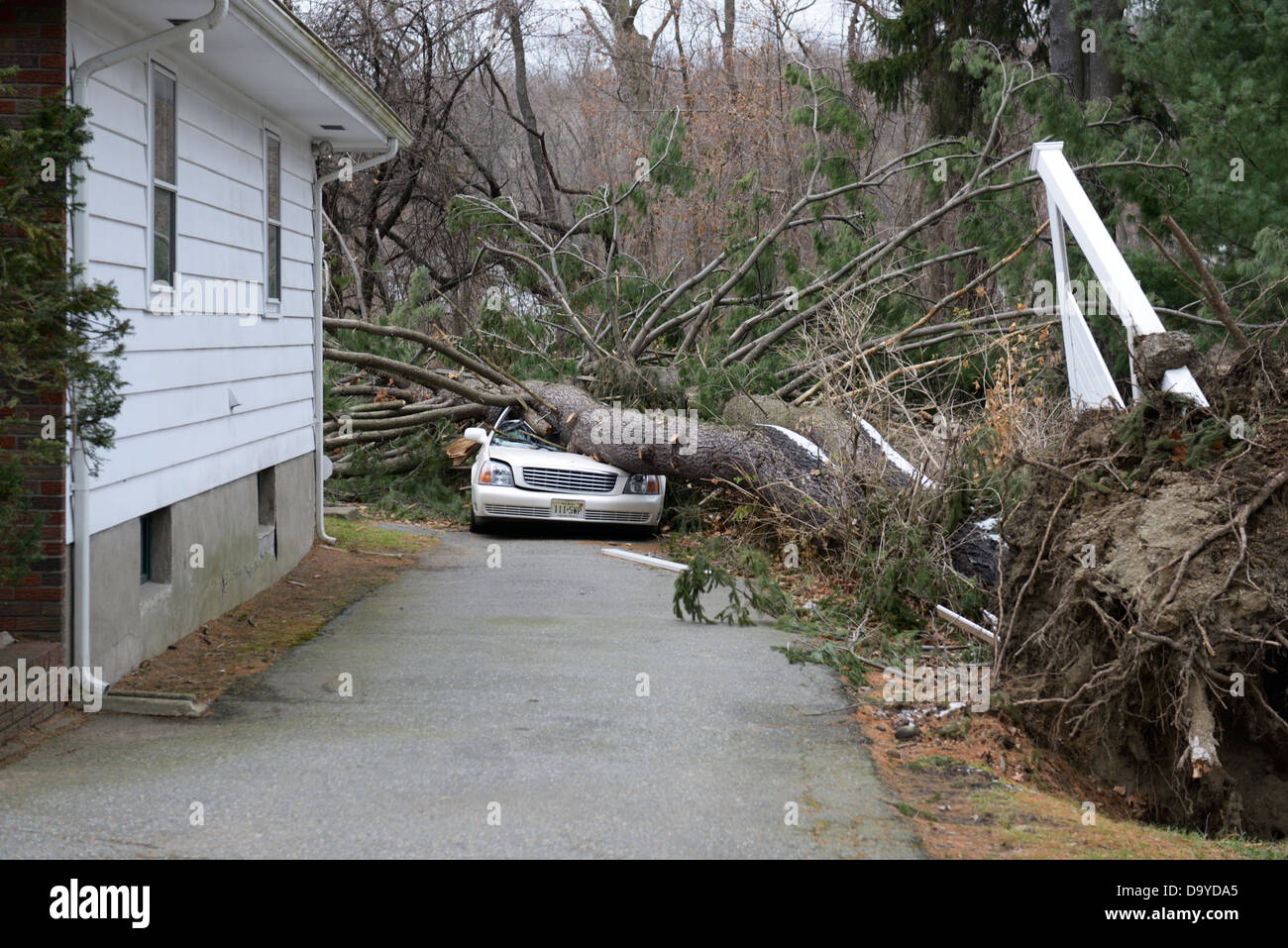 Auto zerquetscht durch einen Baum gefällt durch Hurrikan Sandy Stockbild