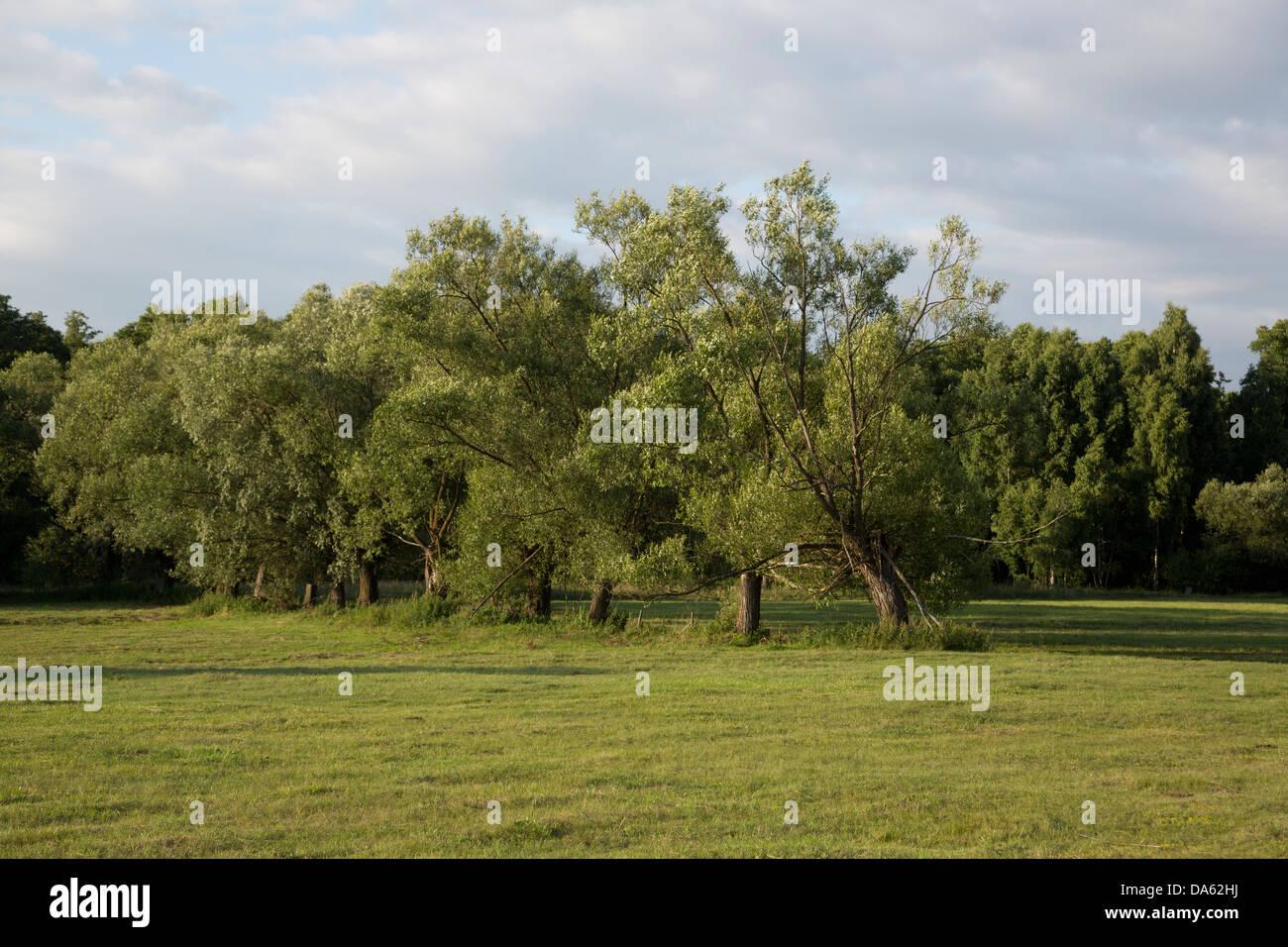Weiden in Polen, Masovia, Europa, Masowien, polnischen Masowien Landschaft Stockbild