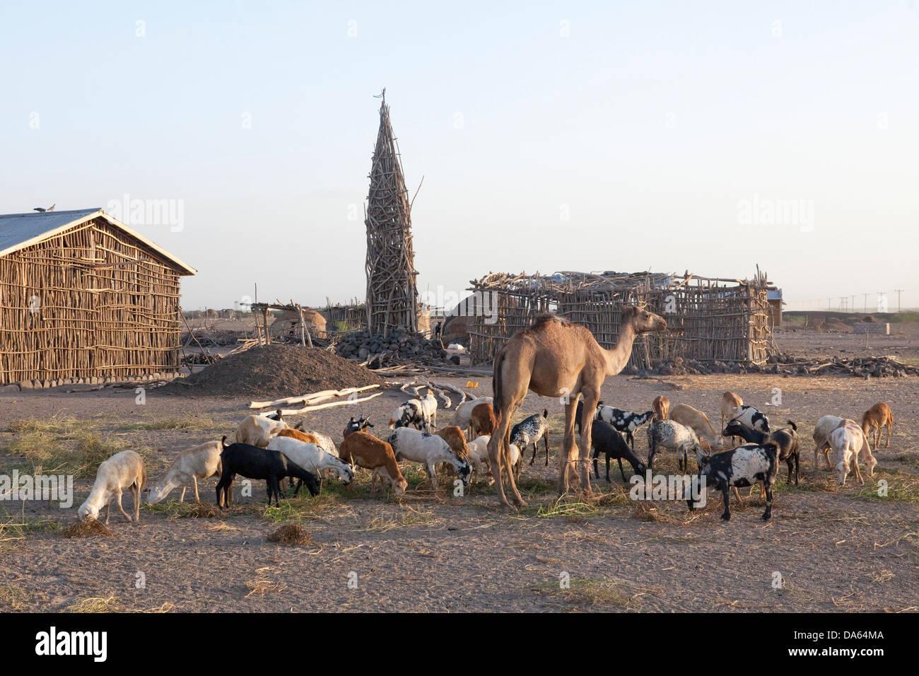 Dorf, Danakil, aus Holz, Afrika, Stadt, Stadt, Äthiopien, Minarett Stockbild