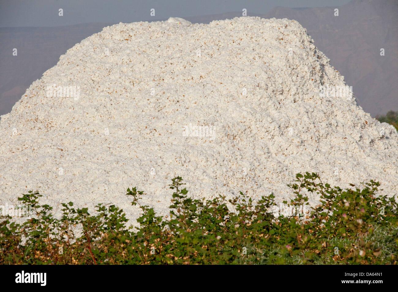 Baumwolle, Ernte, Ernte, Afrika, Landwirtschaft, Äthiopien, Stockbild
