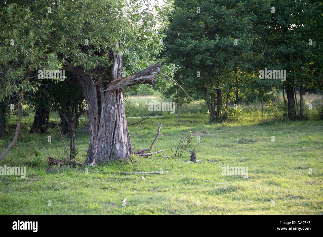 Weide in Polen, Masovia, Europa, Masowien, polnischen Masowien Stockbild