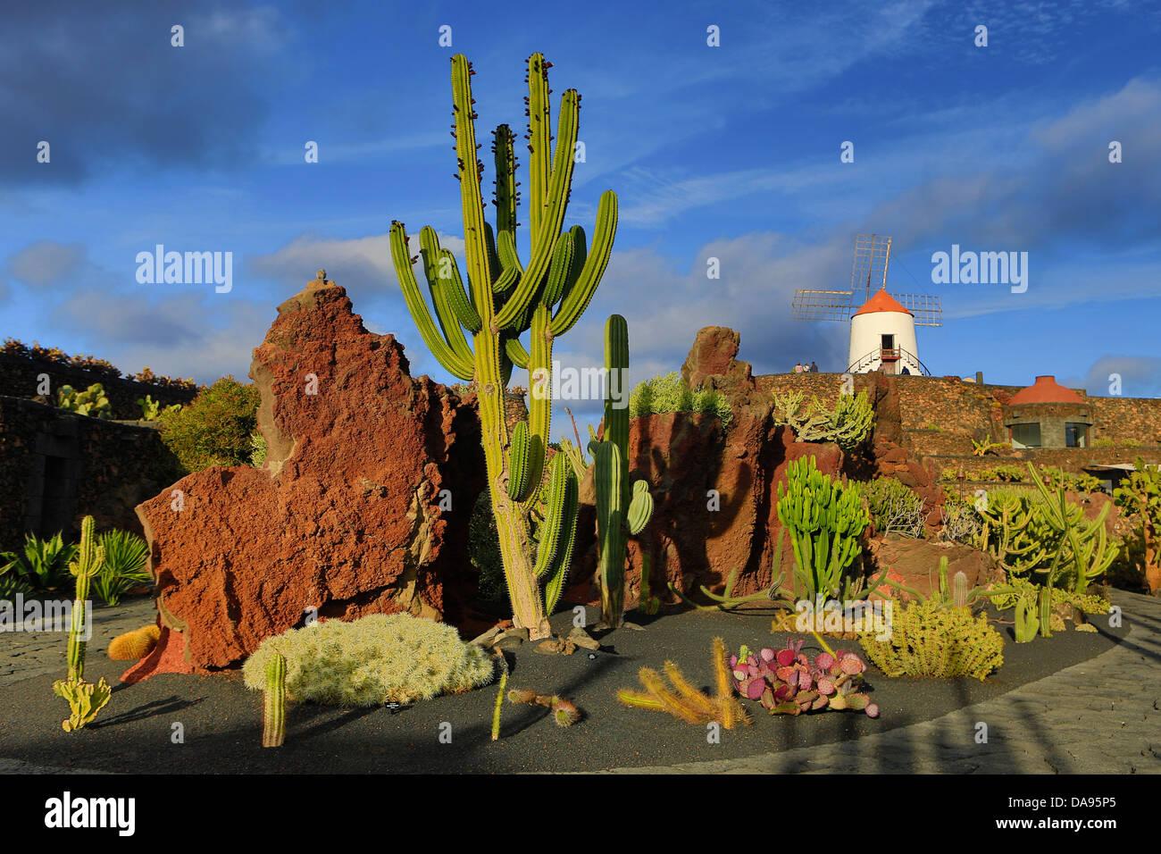 Spanien, Europa, Kanarische Inseln, Guatiza, Lanzarote, Kaktus, Pflanzen, Garten, Insel, Sonnenuntergang, Windmühle Stockbild