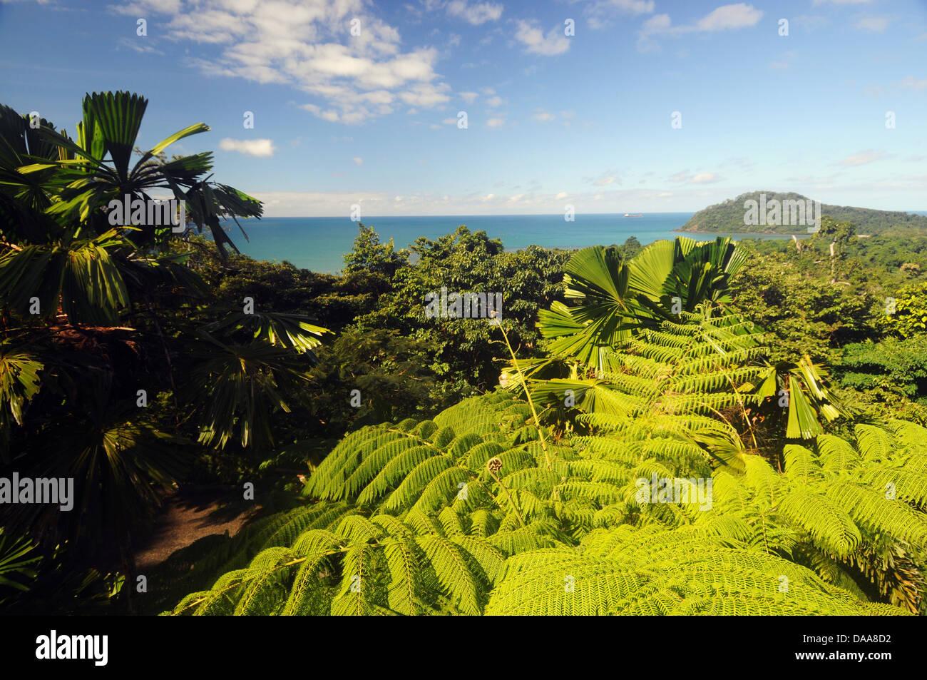 Regenwald, Cape Tribulation und der Coral Sea, Daintree Nationalpark, Wet Tropics World Heritage Area, Australien Stockbild
