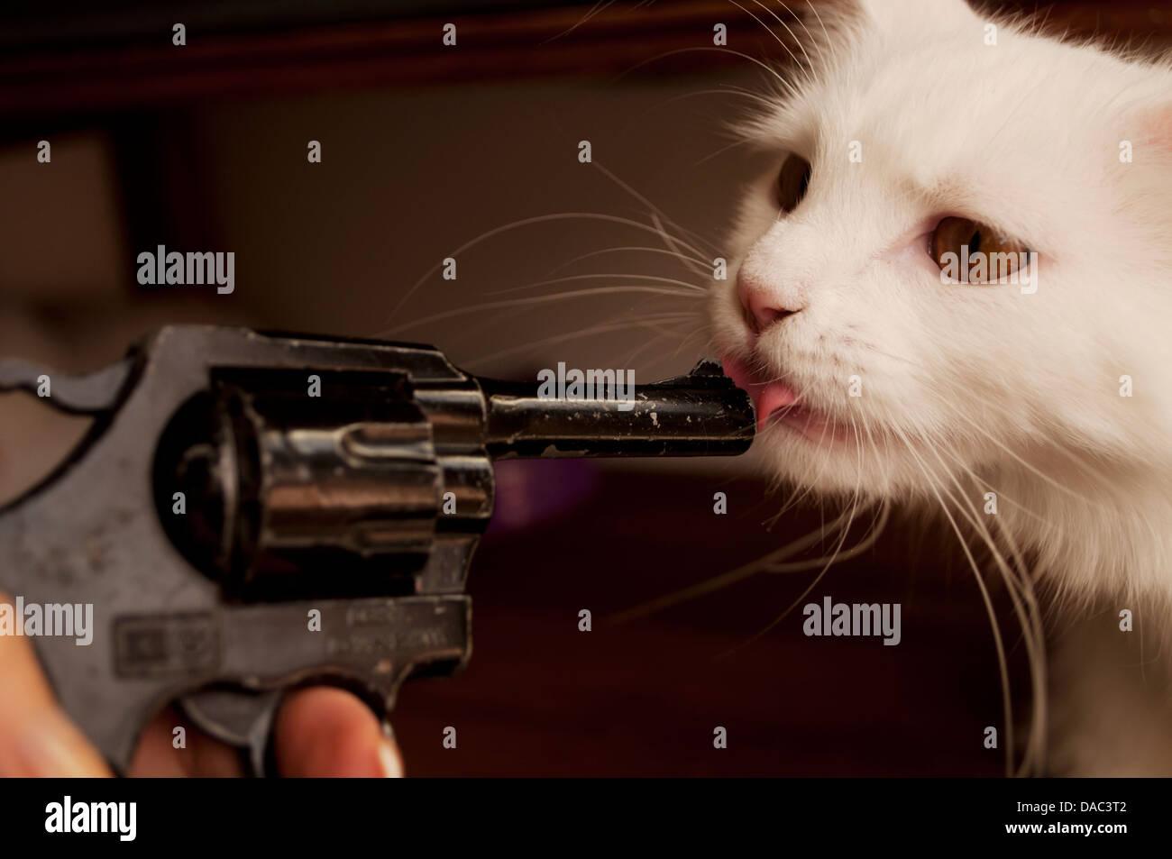 Tapfere Katze Stockbild