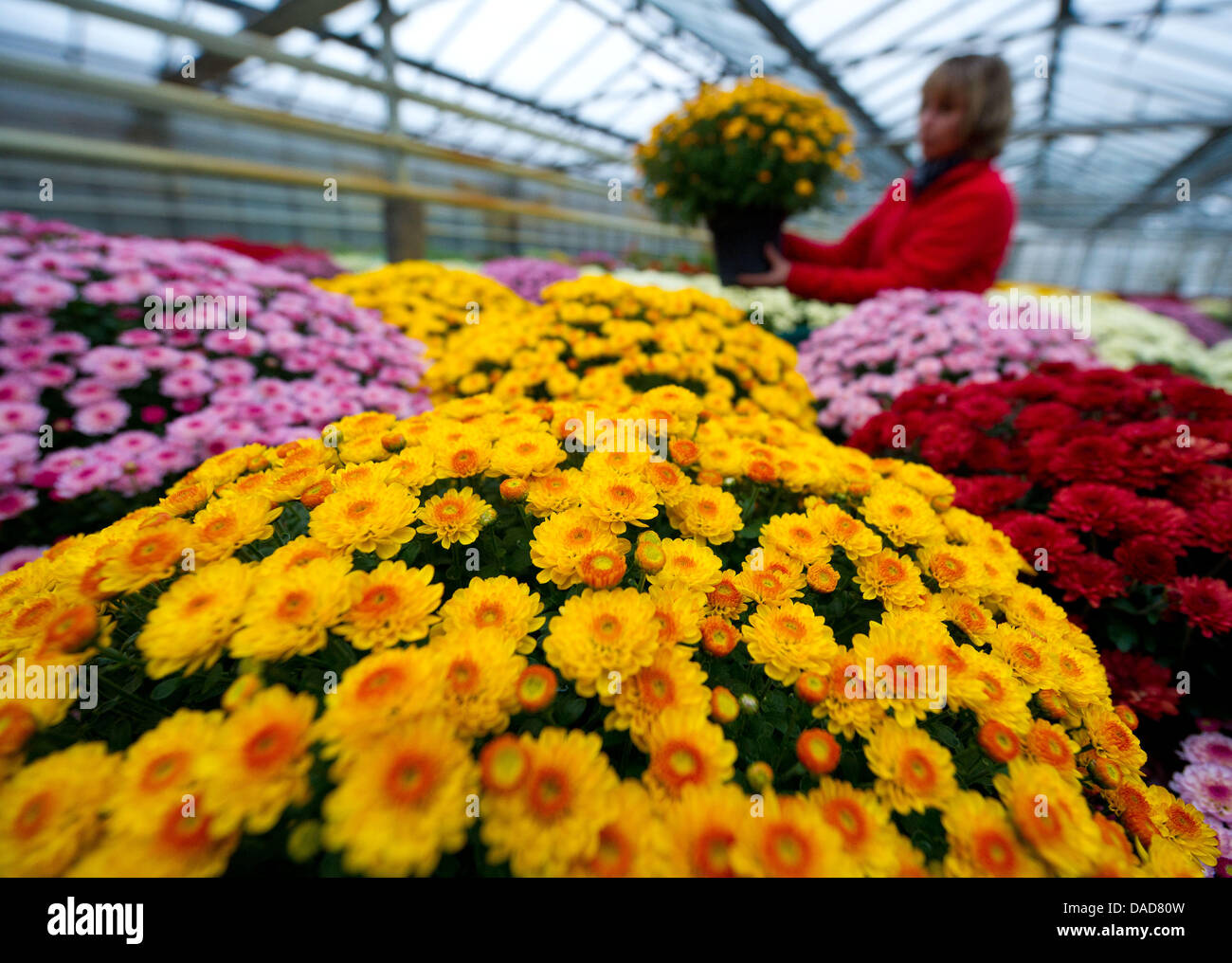 Floraland arnold