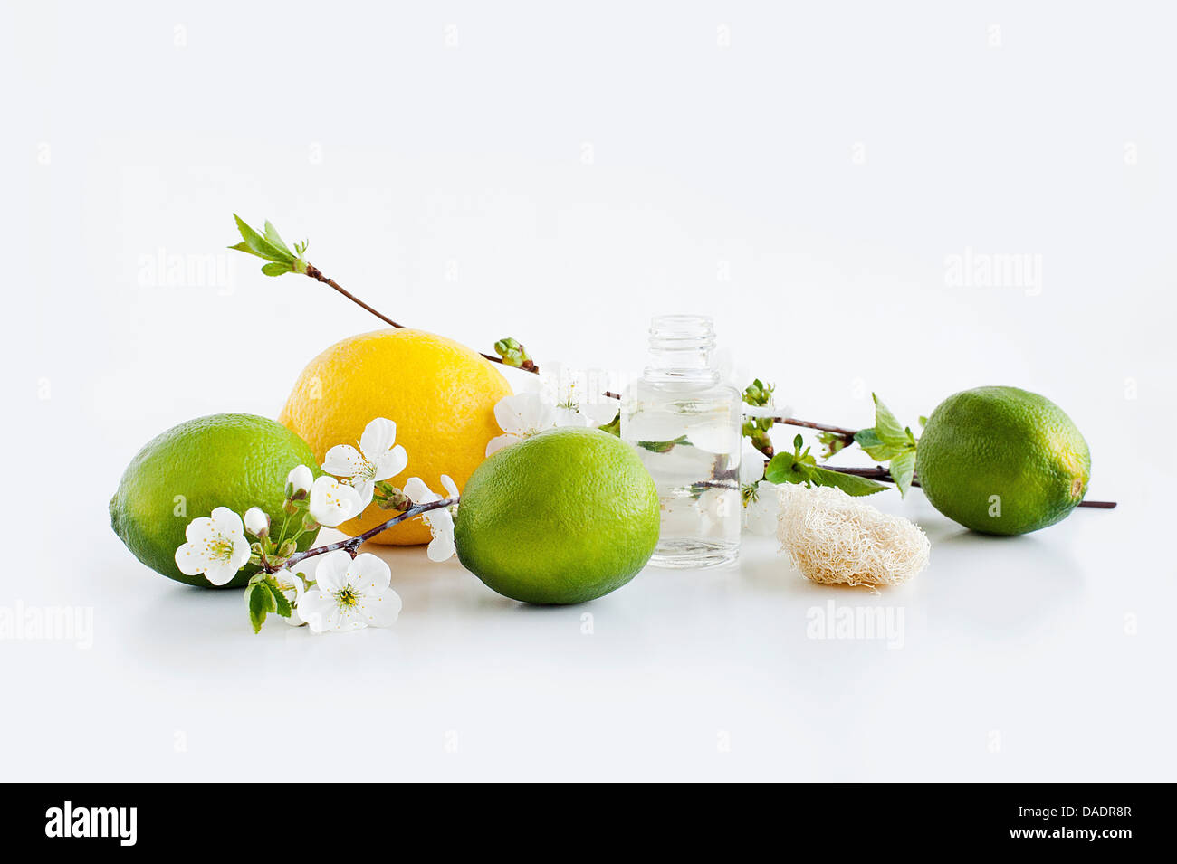 Aromatische Stillleben mit Blüte Zitrone und Limette Stockbild