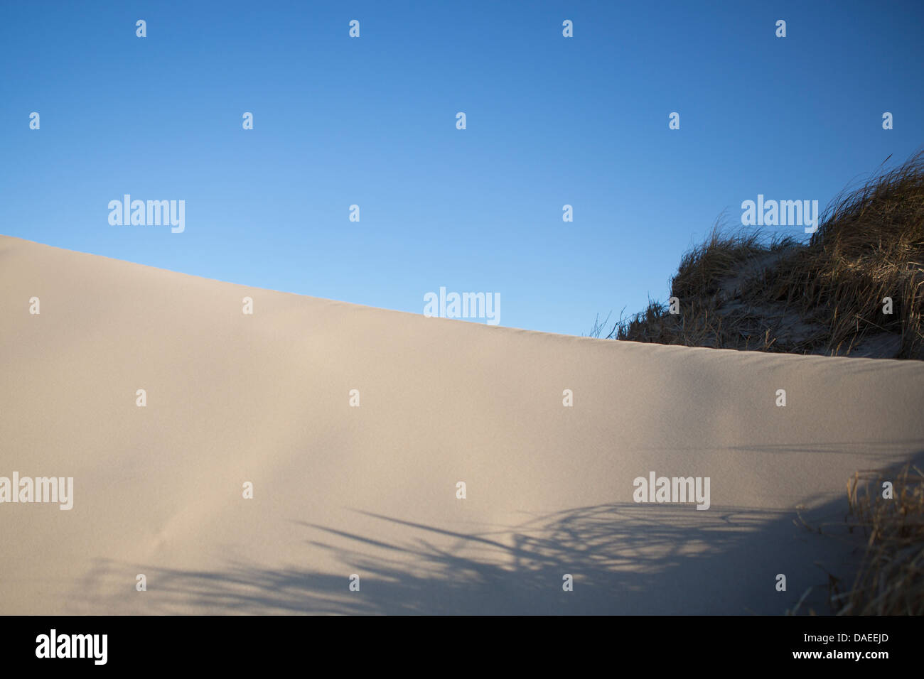 Sanddüne, blauer Himmel, einige vegitation Stockbild