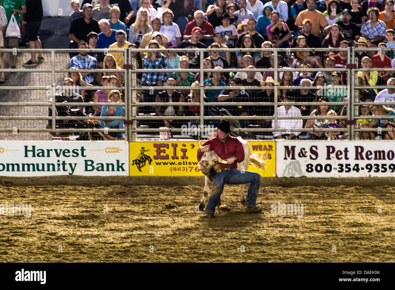Steer wrestling Event beim Rodeo, Cowtown, New Jersey, USA Stockbild