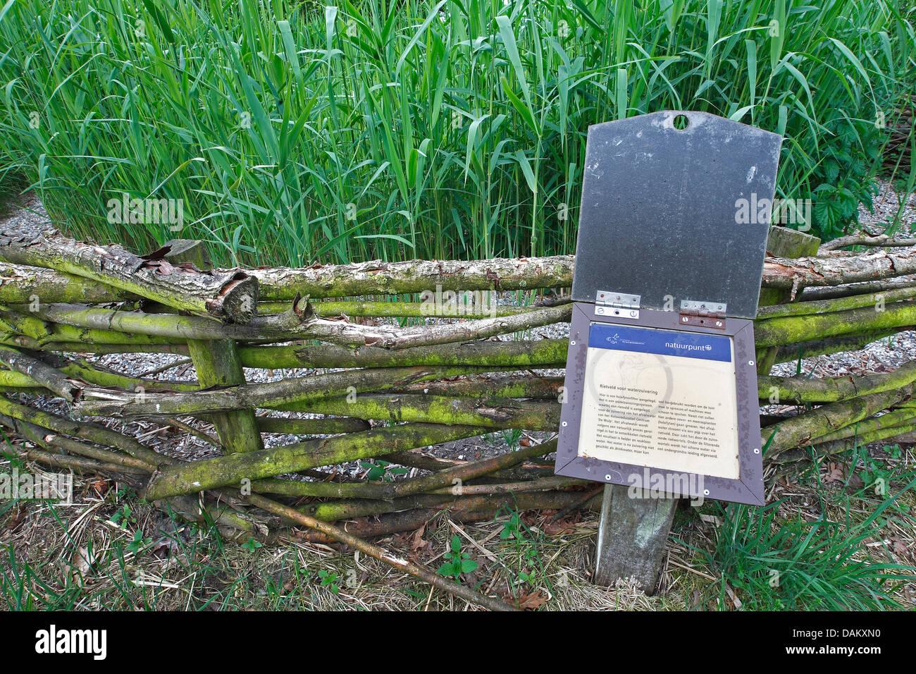 Alternative Wasserreinigung Installation konstruiert Feuchtgebiet, Belgien Stockbild