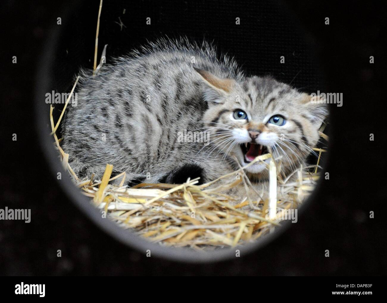 Hisses Stockfotos & Hisses Bilder - Alamy
