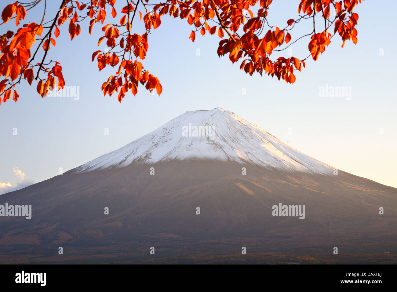 Mt. Fuji mit Herbstfarben in Japan. Stockbild