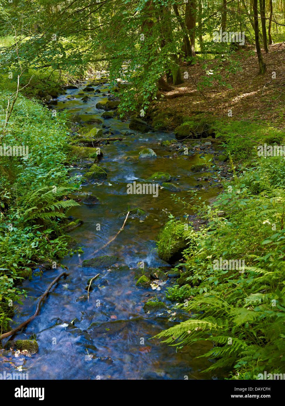 Fluss-Behälters in Biosphere Reserve Vessertal Thüringer Wald, Thüringen, Deutschland Stockbild