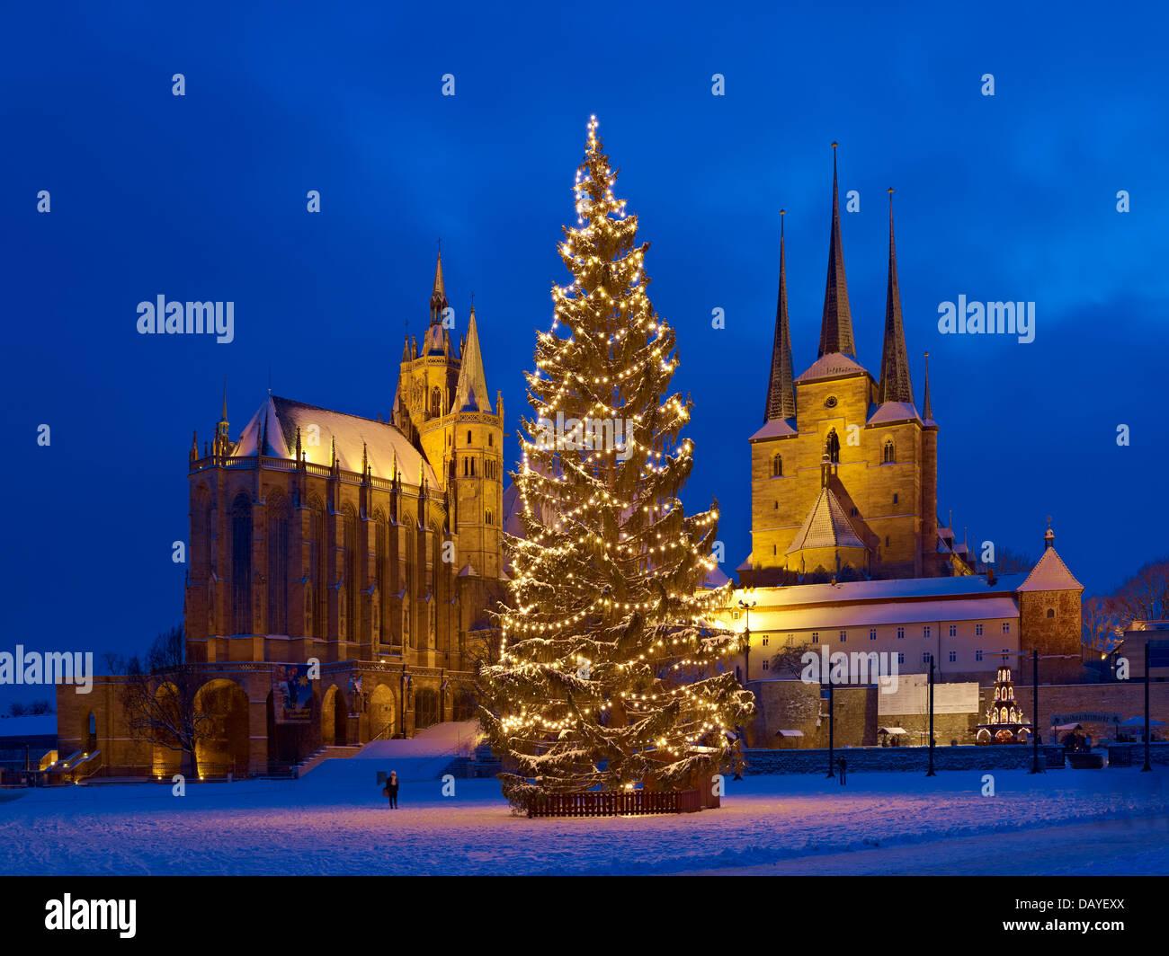 Weihnachtsbaum in erfurt