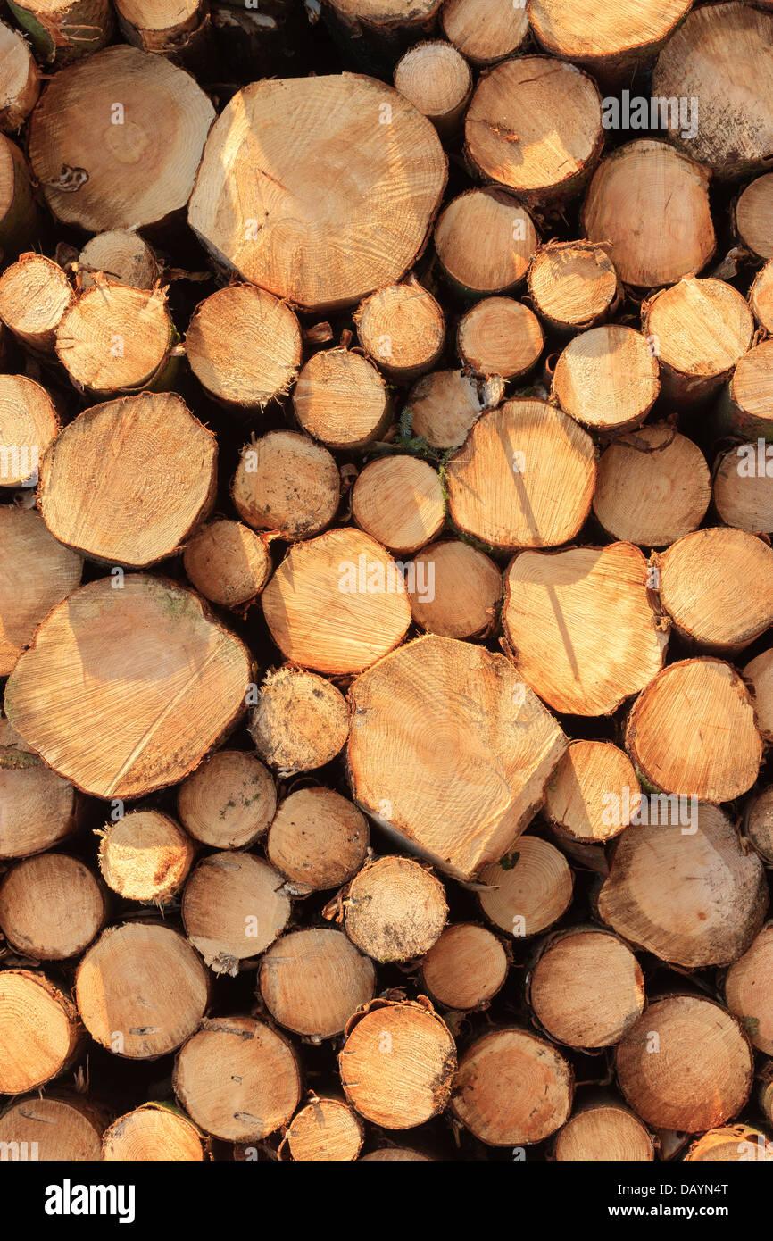 Holz-Stapel Holz Ernte Pembrokeshire Wales Stockbild