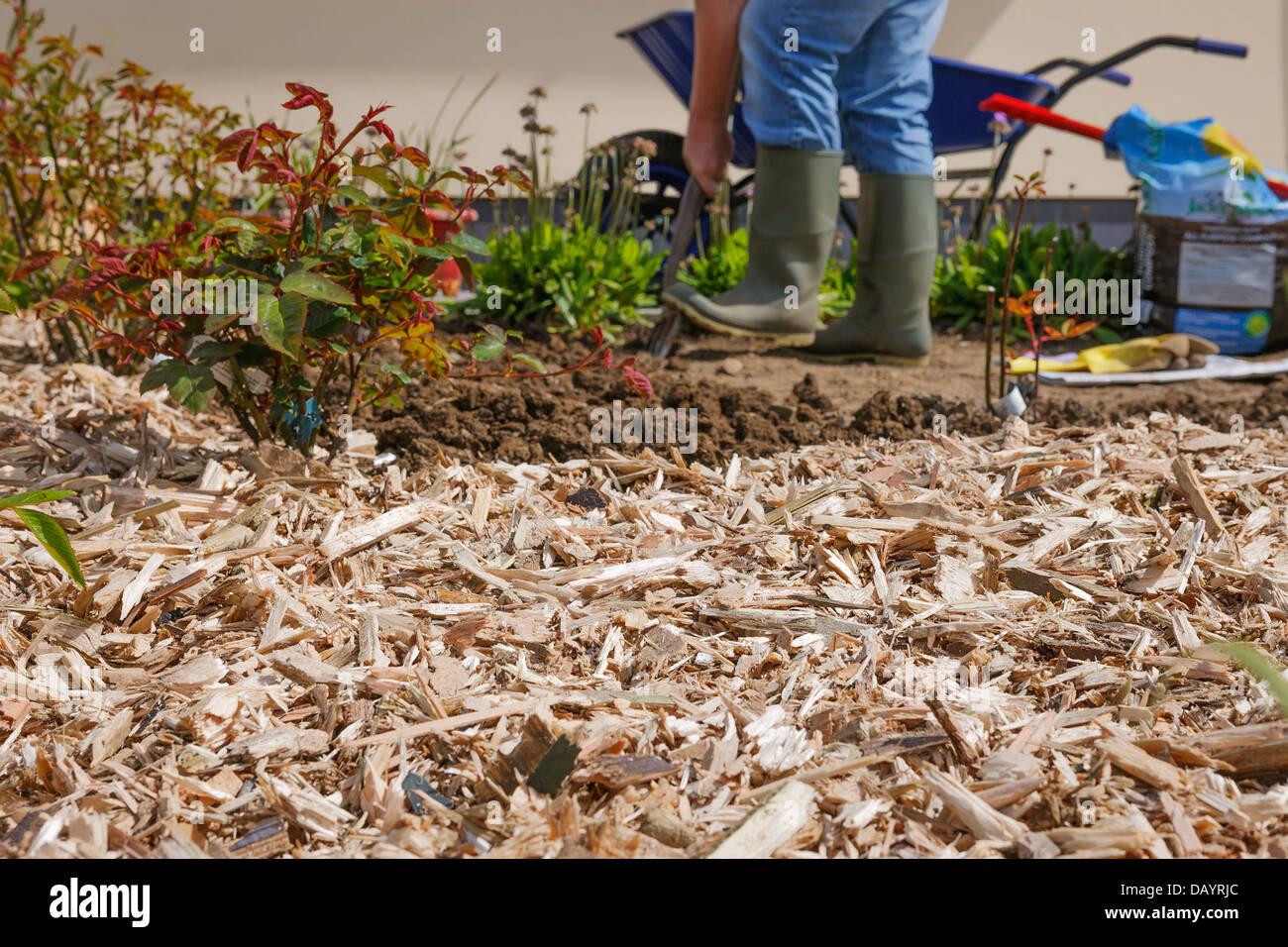 Vorbereitung Und Verbreitung Von Holzspänen Im Garten Stockfoto