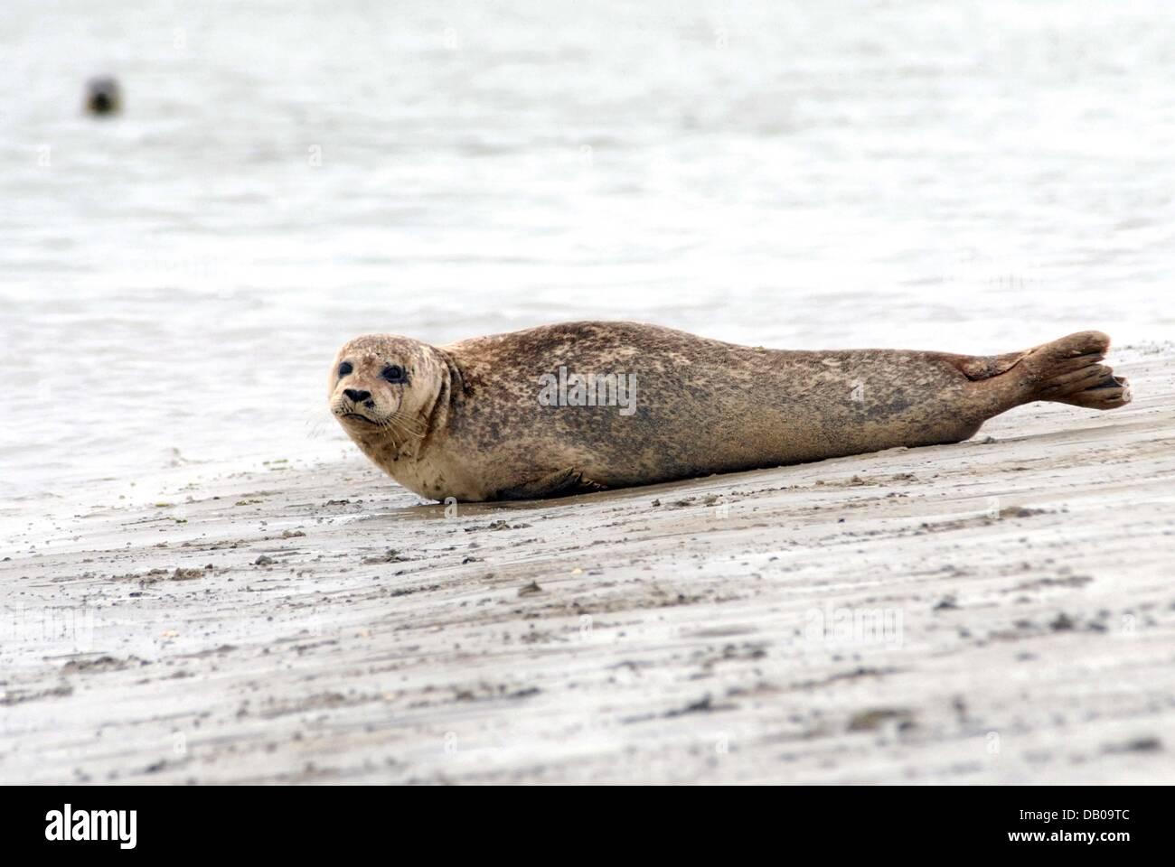 Charmant Seehundbänke Nordsee Fotos - Die besten Einrichtungsideen ...