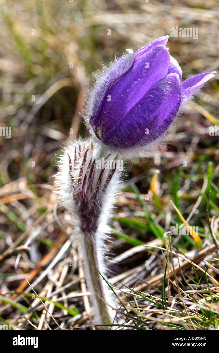Erste Blumen Stockfotos Erste Blumen Bilder Alamy