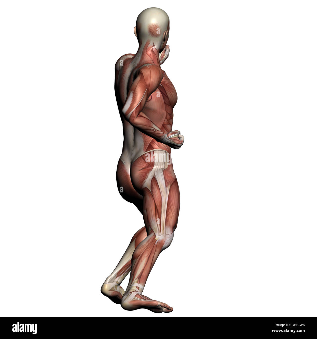 Ziemlich Huhn Muskelanatomie Fotos - Menschliche Anatomie Bilder ...