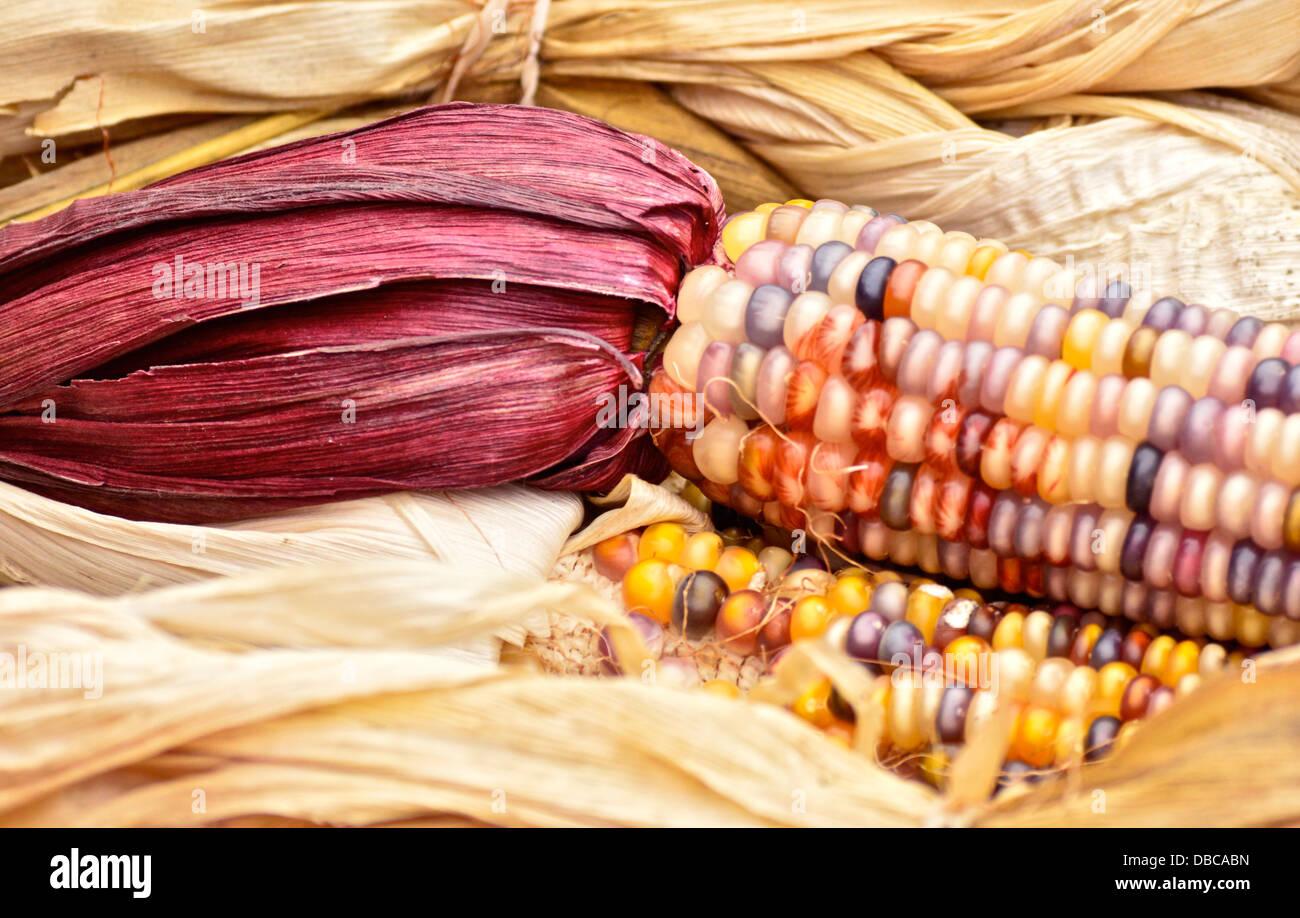 Charmant Mais Färbung Seite Zeitgenössisch - Beispiel Business ...