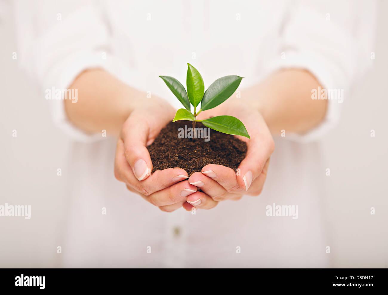Frau die Hand, die junge Pflanze, Ökologie-Konzept Stockbild