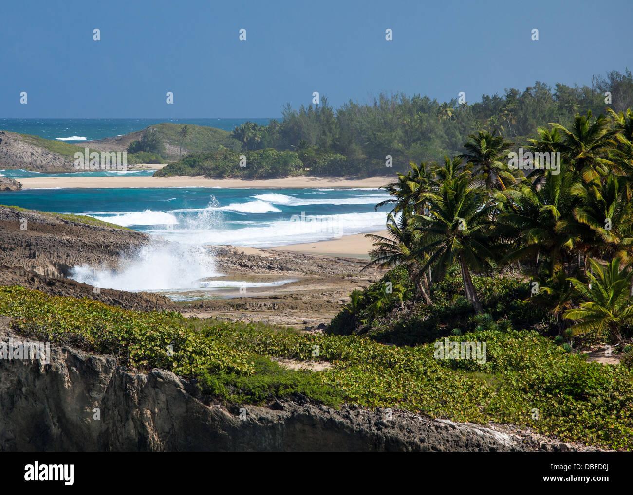 Strände von Punta Palmas Altas an der nördlichen Küste von Puerto Rico. Stockbild