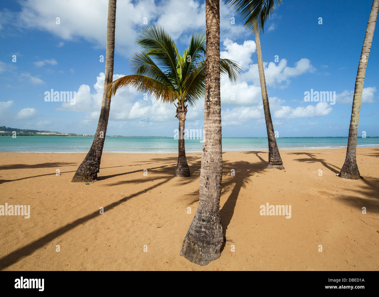 Palmen am karibischen Strand von luqillo, Puerto Rico. Stockbild