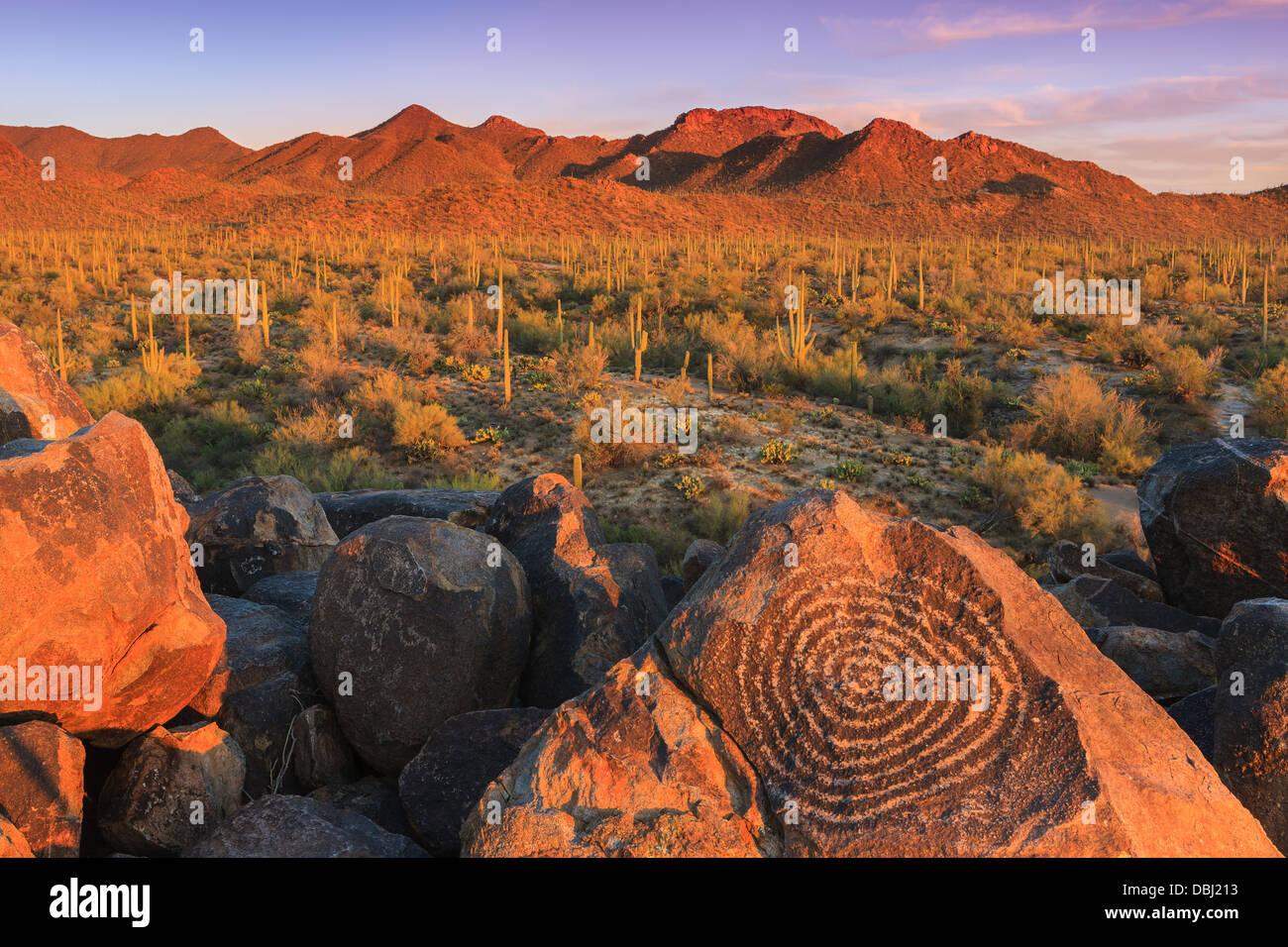 Saguaro-Nationalpark vom Signal Hill, Arizona, USA Stockfoto