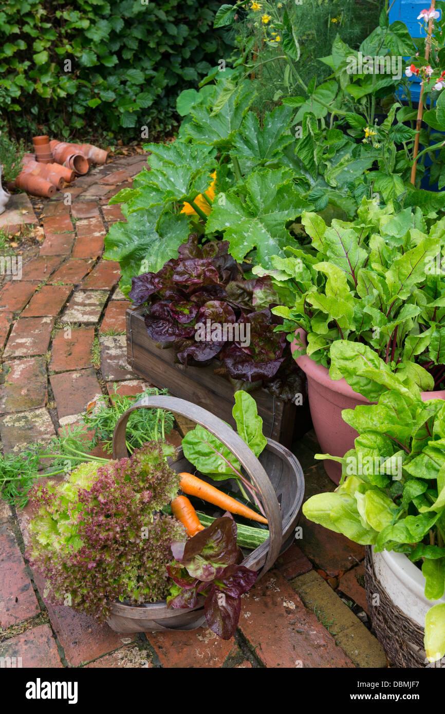 Sammlung von frisch geernteten Sommergemüse von einem kleinen Garten. Stockbild