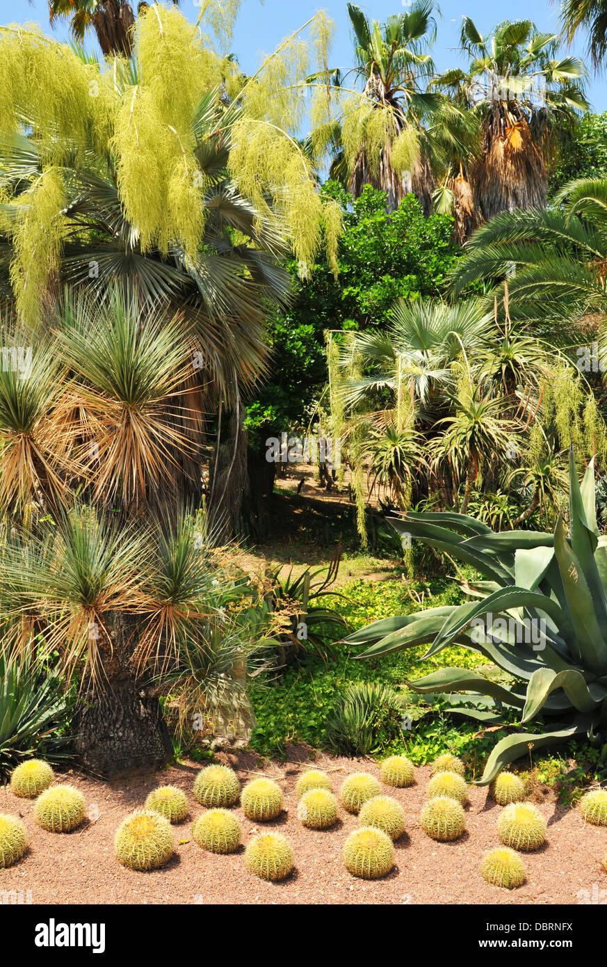 Botanischer Garten In Barcelona Spanien Stockfoto Bild 58914126