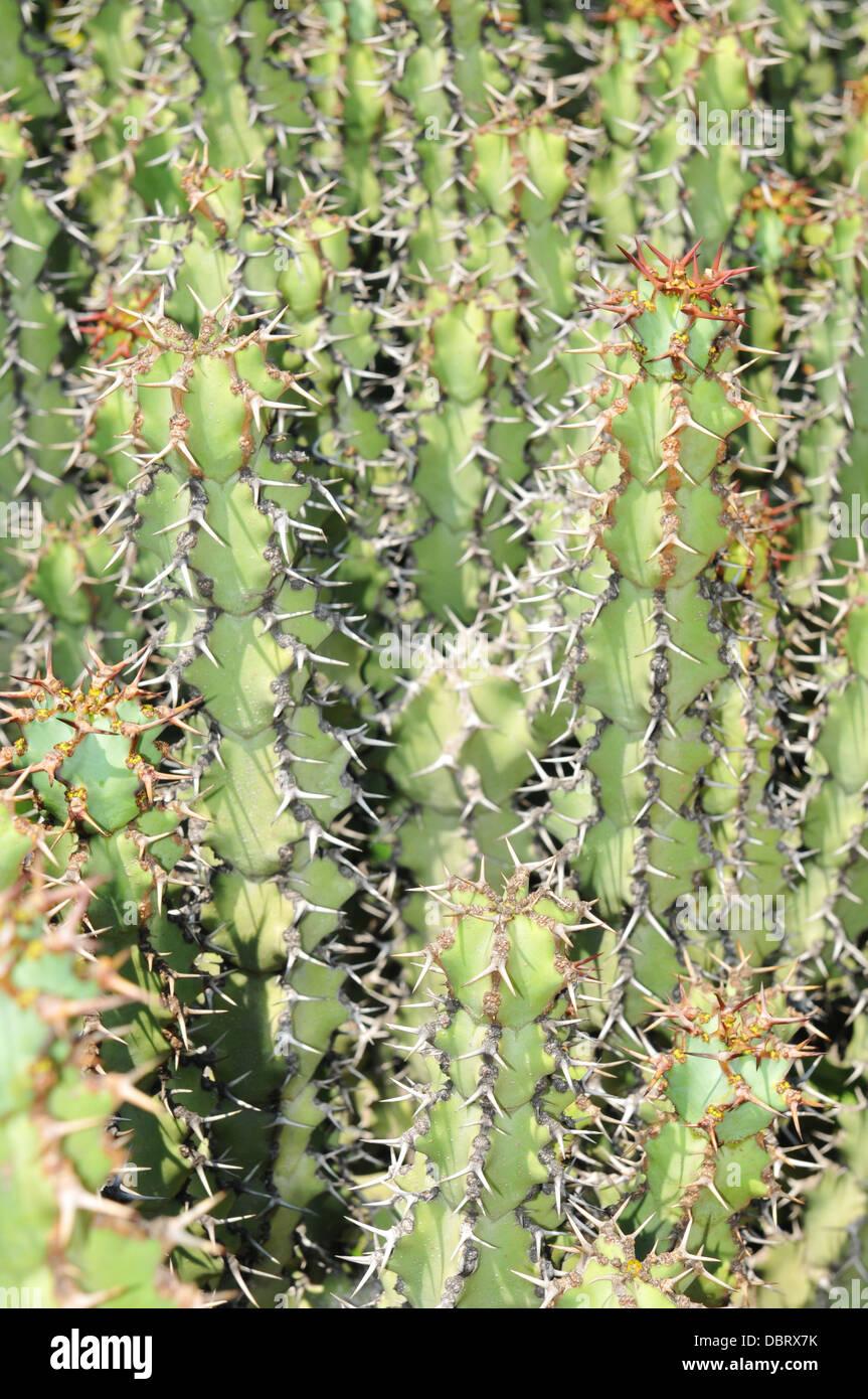 Botanischer Garten In Barcelona Spanien Stockfoto Bild 58917815