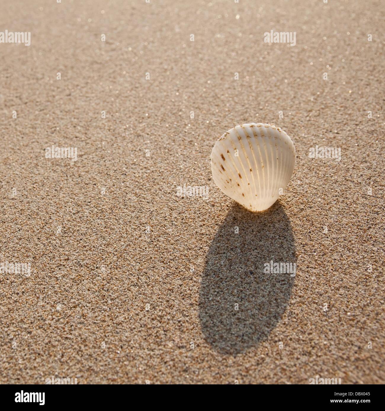 Strand Grenze Küste Küste Design fragile Rahmen idyllischen Makro ...