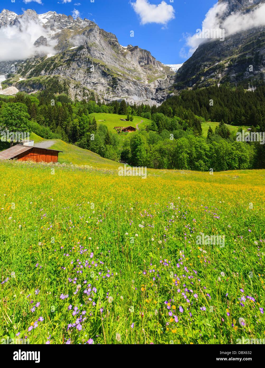 Frühlingsblumen in der Nähe von Grindelwald, Berner Oberland, Schweiz Stockbild
