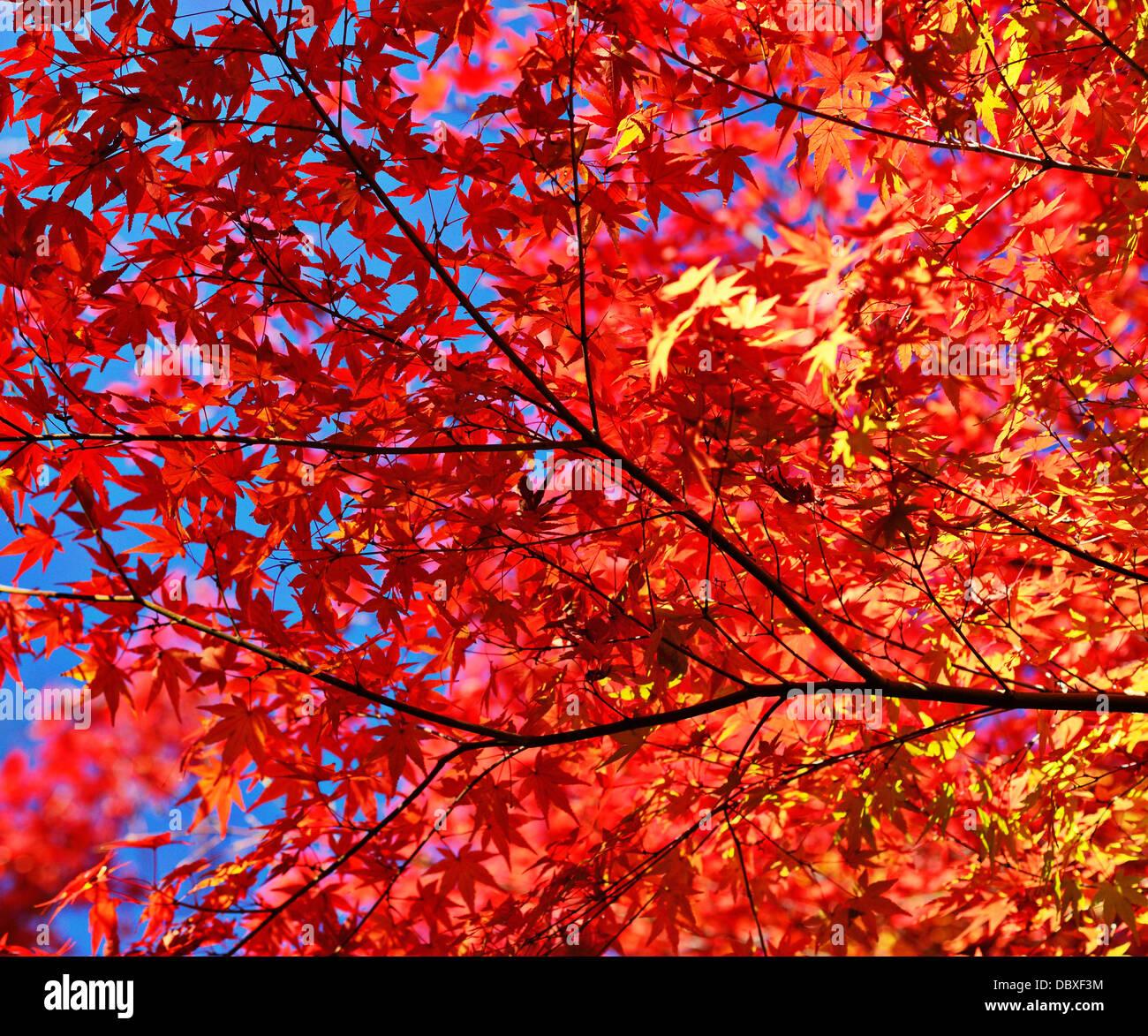 Herbstlaub Blätter und Zweige Stockbild