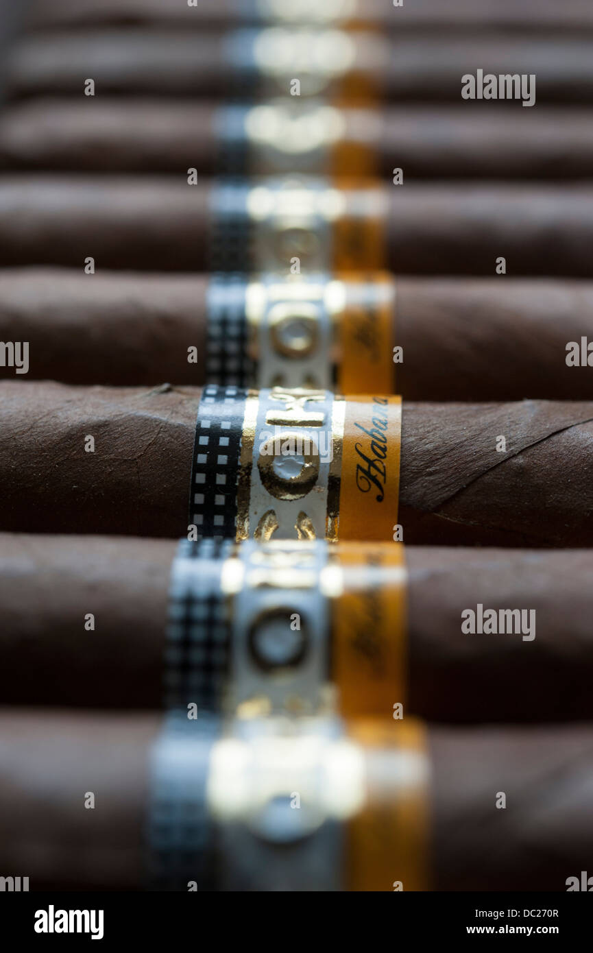 Cohiba Esplendido Havanna Zigarren aus Kuba Stockbild