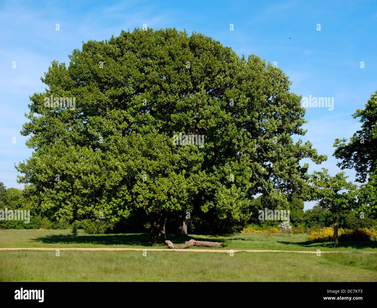 Bäume Baum Garten große massive epische Farbe Farbe LKW grüne ...