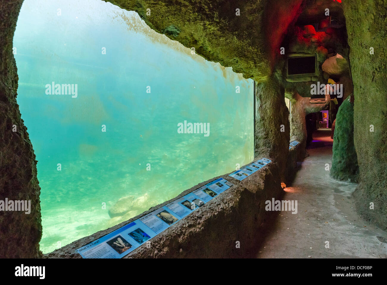 Ozean-Anzeigebereich, Biosphäre 2 Erde Systeme Wissenschaft Forschungseinrichtung an der Universität von Stockbild