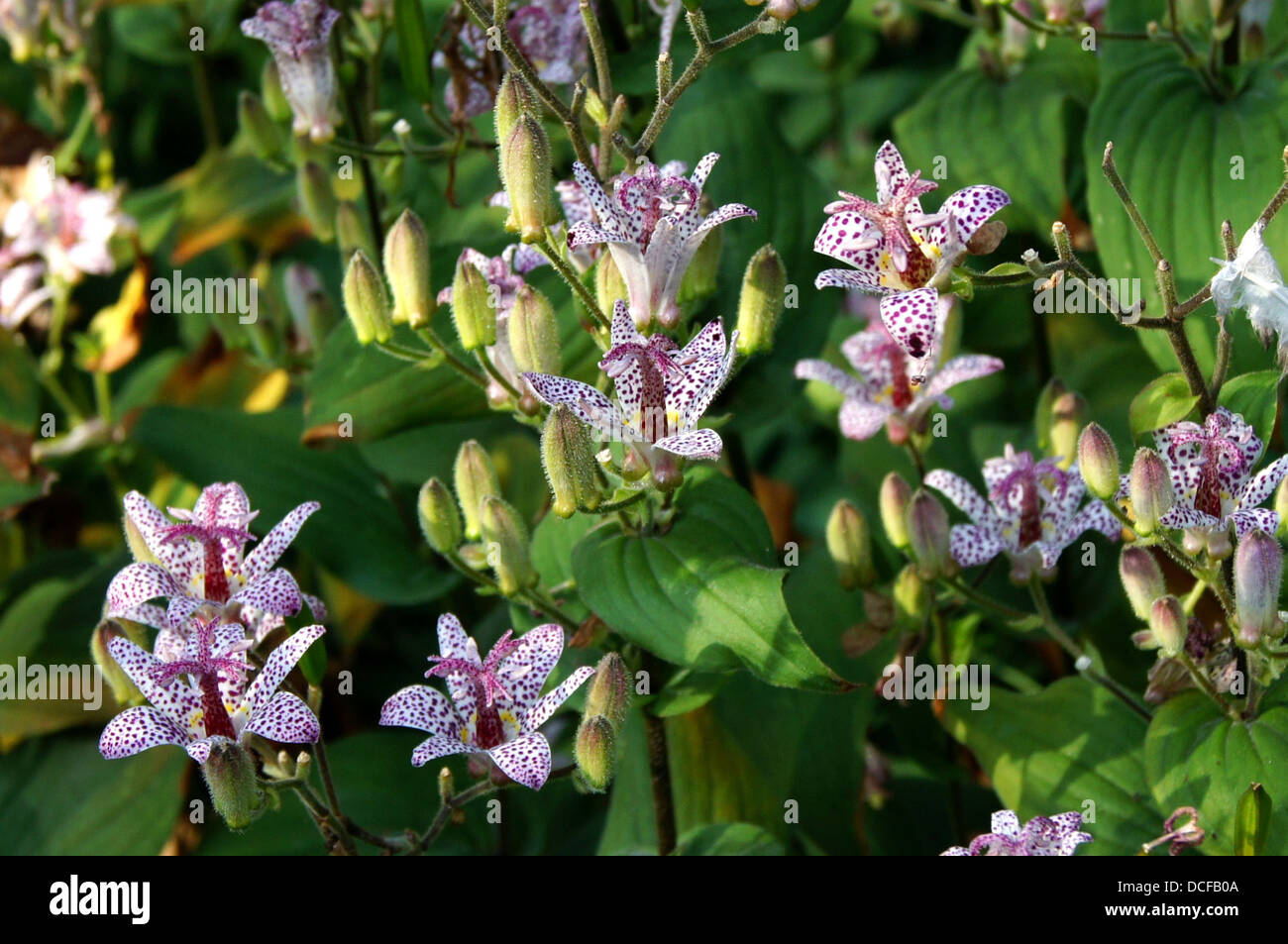 Formosana Stockfotos & Formosana Bilder - Alamy
