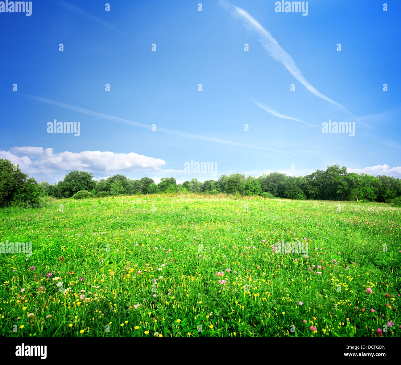 Hellen Wiesenblumen an einem sonnigen Sommertag Stockbild