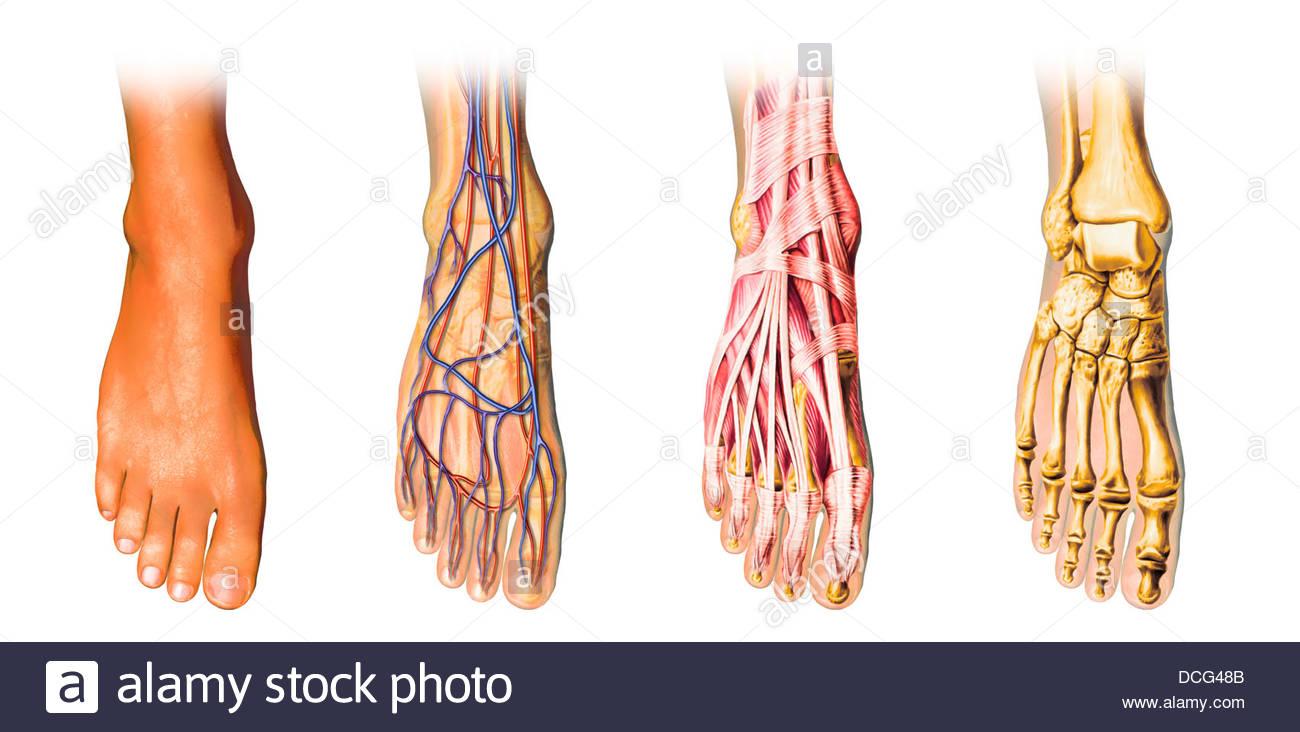 Fantastisch Daumen Anatomie Muskeln Bilder - Anatomie Von ...
