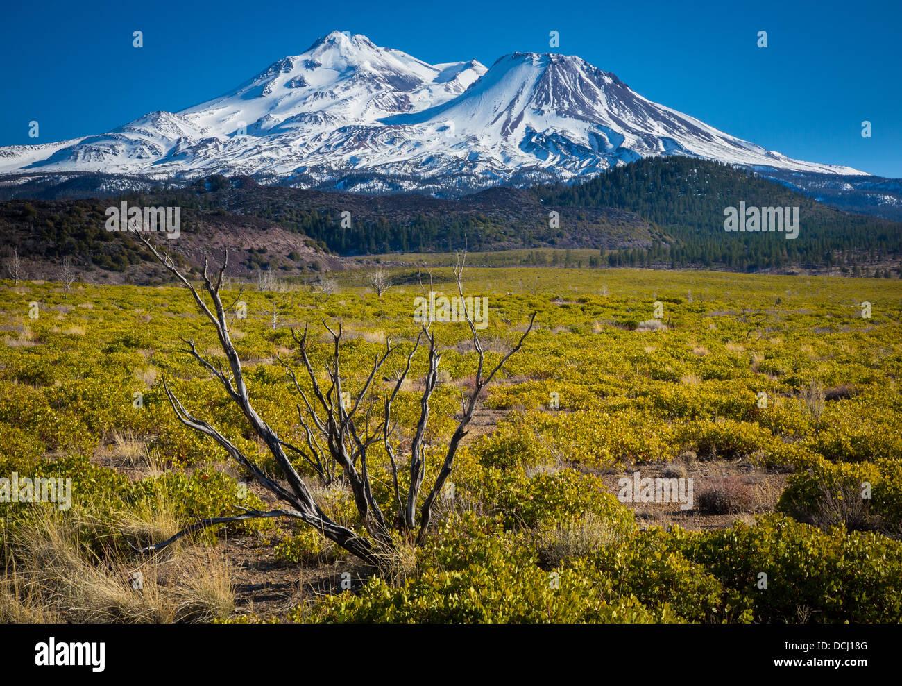 Mount Shasta befindet sich am südlichen Ende der Kaskadenkette in Siskiyou County, Kalifornien Stockbild