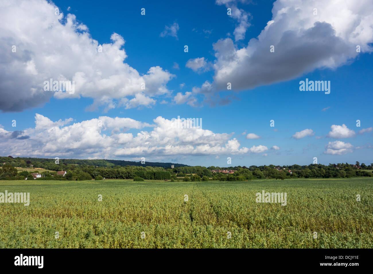 Kent Countryside North Downs Charing Ländliches Motiv Stockbild