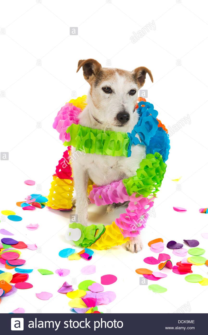Geburtstag Hund Stockfoto Bild 59431694 Alamy